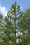 Дерево головоломки обезьяны Стоковое Изображение