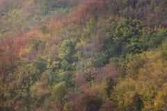 Дерево горы Стоковое фото RF