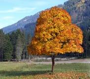 Дерево горы Стоковое Фото