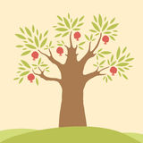 Дерево гранатового дерева Стоковые Изображения RF