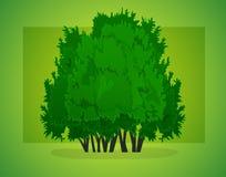 Дерево, группа в составе деревья Стоковая Фотография