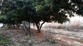 Дерево двигая в выдувание воздухом видеоматериал