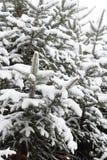Дерево для рождества Стоковое Изображение RF