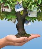 Дерево денег - евро Стоковые Изображения