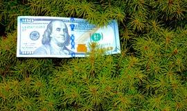 Дерево денег под прямым углом Стоковое Изображение