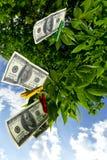 Дерево денег стоковая фотография