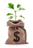 Дерево денег Стоковое Фото