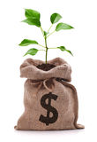 Дерево денег