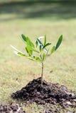 Дерево деревца Стоковая Фотография RF