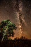 Дерево лета млечного пути Стоковое Изображение RF