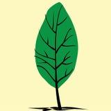 Дерево лета покрытое с листьями Стоковые Изображения RF