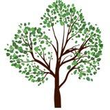 Дерево лета Стоковая Фотография