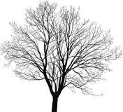 Дерево детенышей клена иллюстрация вектора