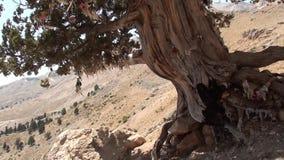 Дерево желания на гористых местностях 3 видеоматериал