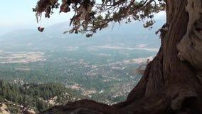 Дерево желания на гористых местностях 2 сток-видео