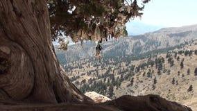 Дерево желания на гористых местностях акции видеоматериалы