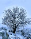 Дерево жизни Стоковое Изображение