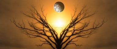 Дерево жизни стоковые изображения rf