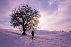 Дерево жизни Стоковая Фотография