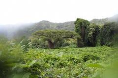 Дерево джунглей Стоковые Фото