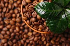Дерево завода кофе и зажаренные в духовке кофейные зерна Взгляд сверху Стоковое Фото