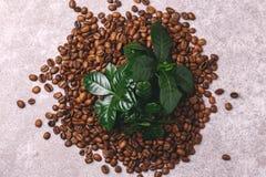 Дерево завода кофе и зажаренные в духовке кофейные зерна Взгляд сверху Стоковое Изображение RF