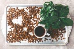 Дерево завода кофе, эспрессо и зажаренные в духовке кофейные зерна Взгляд сверху Стоковые Фотографии RF
