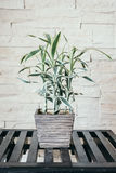 Дерево завода вазы Стоковое Фото