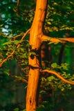 Дерево загоренное заходящим солнцем Стоковые Изображения RF