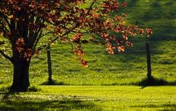 Дерево загородки Солнця подсвеченного вечера сельское Стоковое фото RF