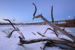 Дерево замороженного реки Стоковые Изображения RF