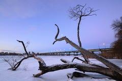 Дерево замороженного реки Стоковое фото RF