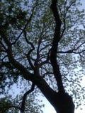 Дерево затмленное заключением Стоковое Изображение RF