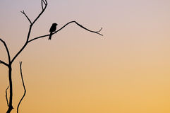 Дерево захода солнца Стоковое Изображение RF