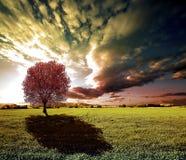Дерево захода солнца и зеленые поля Стоковые Фотографии RF