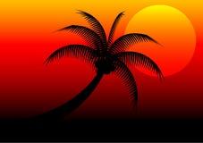 Дерево захода солнца и кокоса стоковое изображение