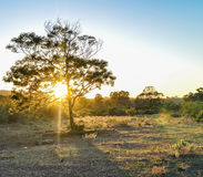 Дерево захода солнца стоковое фото