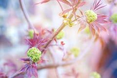 Дерево зацветает весной, красивая открытка стоковое фото