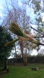 Дерево зацветая в разрешение Белфаст Стоковые Изображения RF