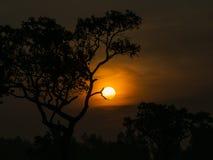 Дерево за Солнцем Стоковые Фото