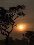 Дерево за Солнцем Стоковые Изображения