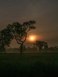 Дерево за Солнцем Стоковое фото RF