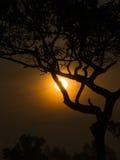 Дерево за Солнцем Стоковое Изображение