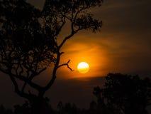 Дерево за Солнцем Стоковое Фото