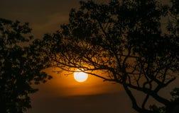 Дерево за Солнцем Стоковые Фотографии RF