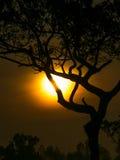 Дерево за Солнцем Стоковая Фотография RF