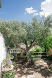 Дерево зеленого цвета водяной помпы в apulia alberobello города Италии Trullis Стоковое Изображение RF