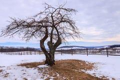 Дерево зимы в поле Вирджинии Пьемонте Snowy Стоковое Изображение