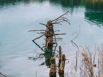 Дерево зимы мертвое Стоковая Фотография