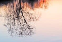 Дерево зимы на заходе солнца Стоковые Фото